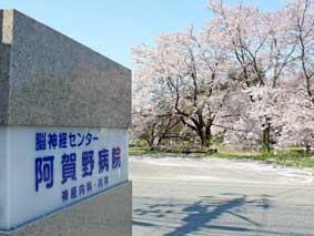 病院案内版向かいの桜