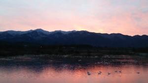 朝日の中のあがの池と白鳥