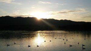 朝のあがの池